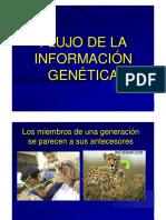 Presentacion_2_-_Flujo_info_genetica