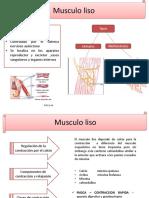 musculo liso fisiologa