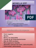Presentacion SALMONELLA.odp[1]