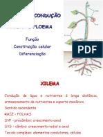 xilema_e_floema_nani%5b1%5d.ppt
