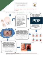 MG TG Embriologia II