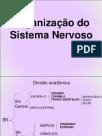 1 Sistema Nervoso