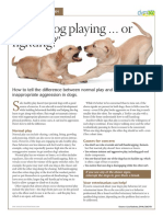 veterinary-handout-playing or fighting
