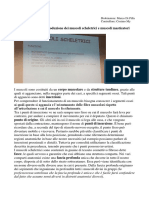 A 4.10.19 - Introduzione Dei Muscoli Scheletrici e Muscoli Masticatori