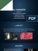 Exposicion Del Corazon y Marcapasos