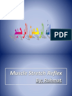 muscle stretch reflex overveiw