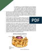 Retículo Endoplasmático - Microtubulo -Ribosomas