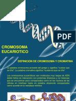 Cromosomas eucariotico