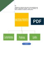 LOS MACRONUTRIENTES.docx