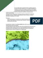 preinforme bioquimica