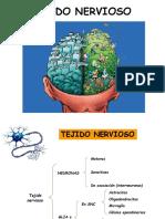 3. Tejido nervioso 2019.pdf