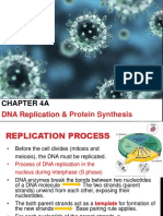 MF009 4A DNA Replication and Protein Synthesis James L2