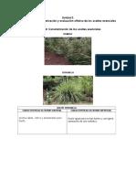 Actividad 3.Caracterización de Los Aceites Esenciales