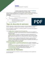 Absorción de Nutrientes.docx