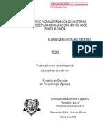 Aislamiento y caracterizacion endofitas en papa.pdf