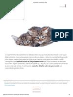 Gato Montés_ Características y Fotos
