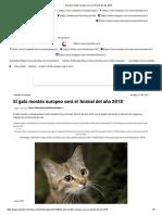El Gato Montés Europeo Será El 'Animal Del Año 2018'