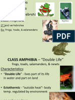 5 - amphibians - weebly