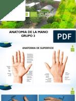 ANATOMIA DE LA MANO (1).pdf