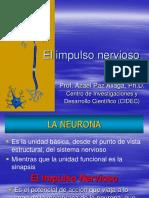 5taEl Impulso Nervioso-convertido