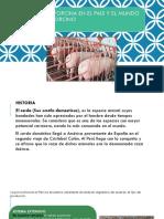 Porcicultura en El Peru y El Mundo