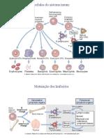 orgaos linfoides, Tipos de antigeno, TCR e BCR NUT.pdf