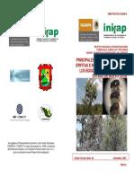 PLANTAS PARASITAS.pdf