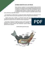 236616721-Sistema-Digestivo-de-Los-Peces.pdf