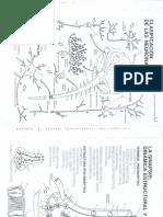 Dibujos Neuroanatomia