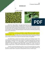 Final's CIP 2B1 Microbiology Mung Bean