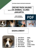 CRIPTORCHIDISM VITA-FEBY.pptx