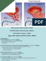 9. Bolile Organelor Genitale Masculine. Sifilisul