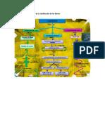 Mapa Conceptual y Mental de La Clasificación de Los Bienes