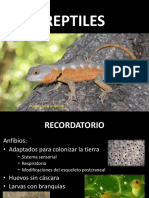 Reptiles I