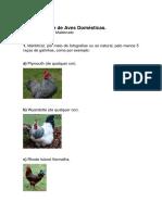 aves domésticas