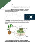 Fisiologia en Las Plantas