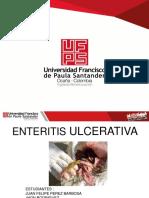 Enteritis Ulcerativaa