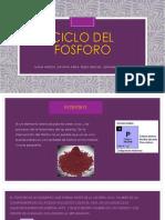 CICLO-DEL-FOSFORO.pptx