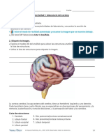 Brain Lab Activity Es