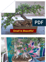 ´bonsai small is beautiful