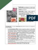 Ficha de Microbiologia (2)