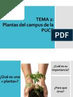 Plantas de la PUCP