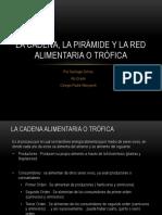 La Cadena y La Pirámide Alimenticia - Santiago Ochoa 4to