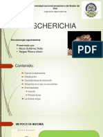 ESCHERICHIA Exposicion Final