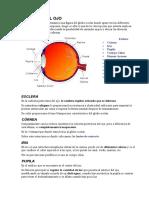 anatomia visual