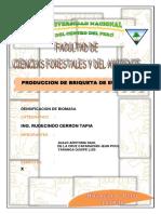 INFORME-BRIQUETAS-1