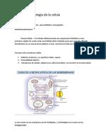 Resumen I2.docx