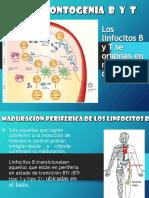 inmunologia Ontogenia B