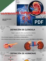 glandulasuprarenal-151114222636-lva1-app6891.pdf