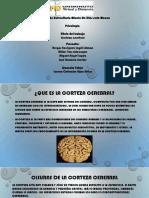 Capsula Cientifica Partes de La Corteza Cerebral